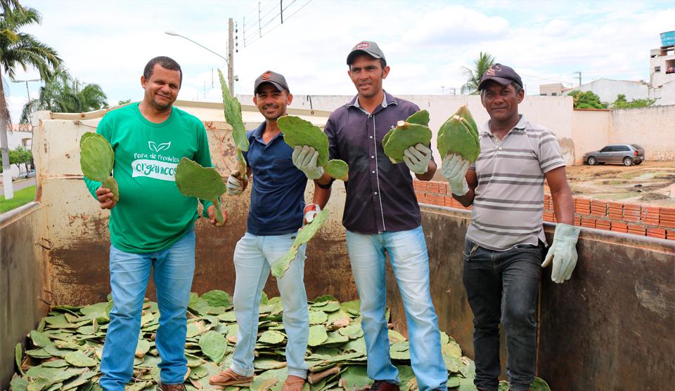 São José do Belmonte distribui 10 mil folhas de palmas para Associação de Caprino e Ovinos