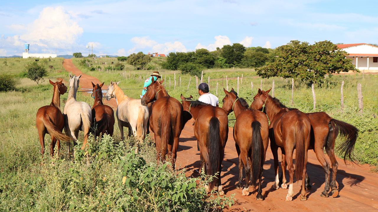 Prefeitura apreende nove cavalos que estavam soltos às margens da PE-430